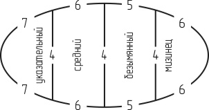 Схема распределения петель для вяания пальцев перчатки