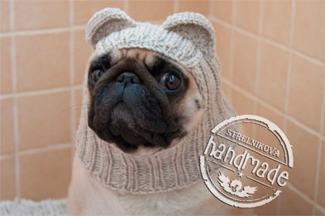 Вязаная шапочка для собаки (мопса)